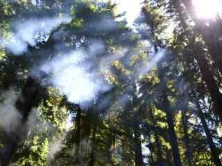 森林中的曙光风景图片