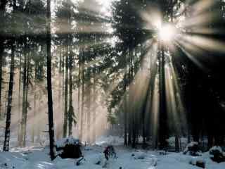 唯美雪地中的曙光风景图片