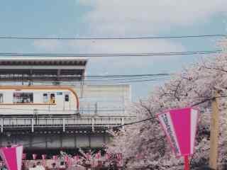 日本樱花小清新风