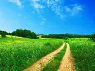 绿色田野里的小路