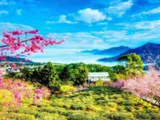 百花争艳的春天山