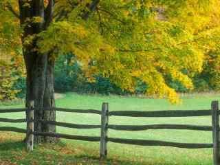 田园里的大树唯美