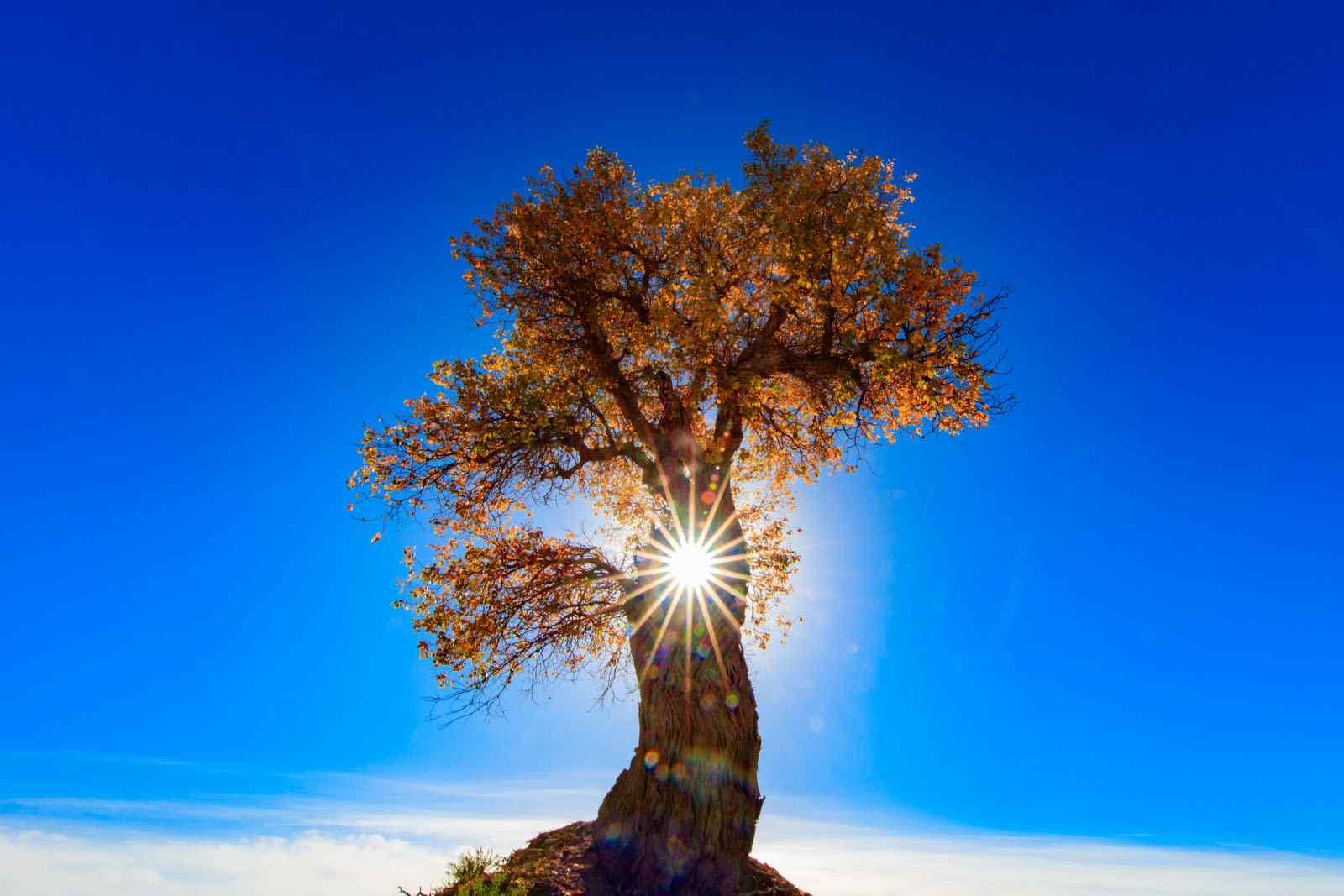 桌面大树壁纸_眼光下唯美大树风景图片桌面壁纸 -桌面天下(Desktx.com)