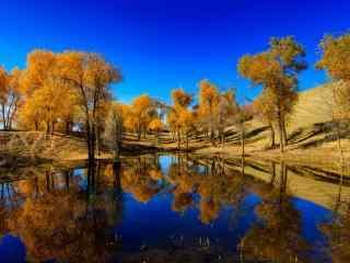 塔里木河畔唯美小清新风景图片桌面壁纸