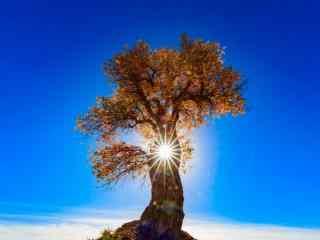 眼光下唯美大树风景图片桌面壁纸