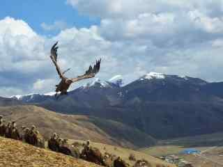 一群老鹰栖息在雪山下的唯美风景图片