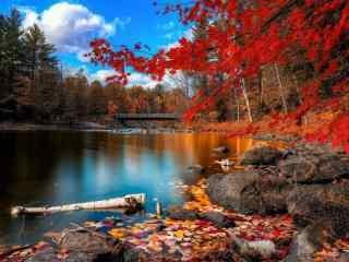 秋天池塘边唯美风