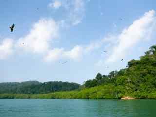 老鹰盘旋的绿色山水风景图片