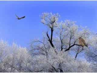 翱翔在蓝天下的老鹰冬季唯美风景图片