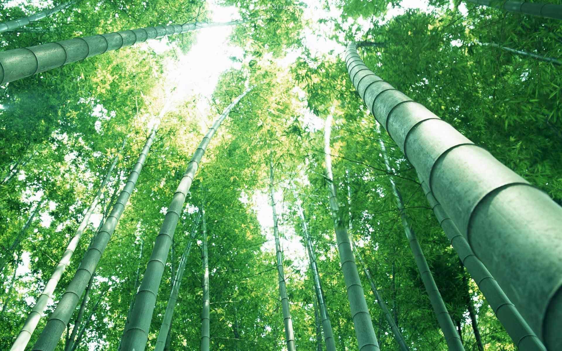 秀美的竹林风景桌面壁纸