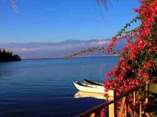 春花烂漫的洱海唯美风景图片