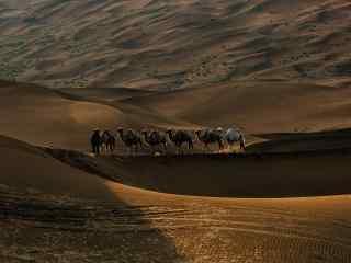 沙漠与骆驼风景图片