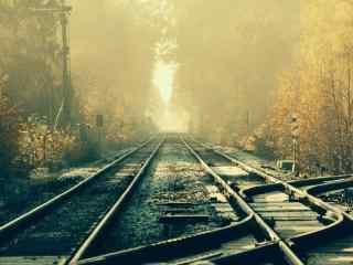 林间的火车轨道唯