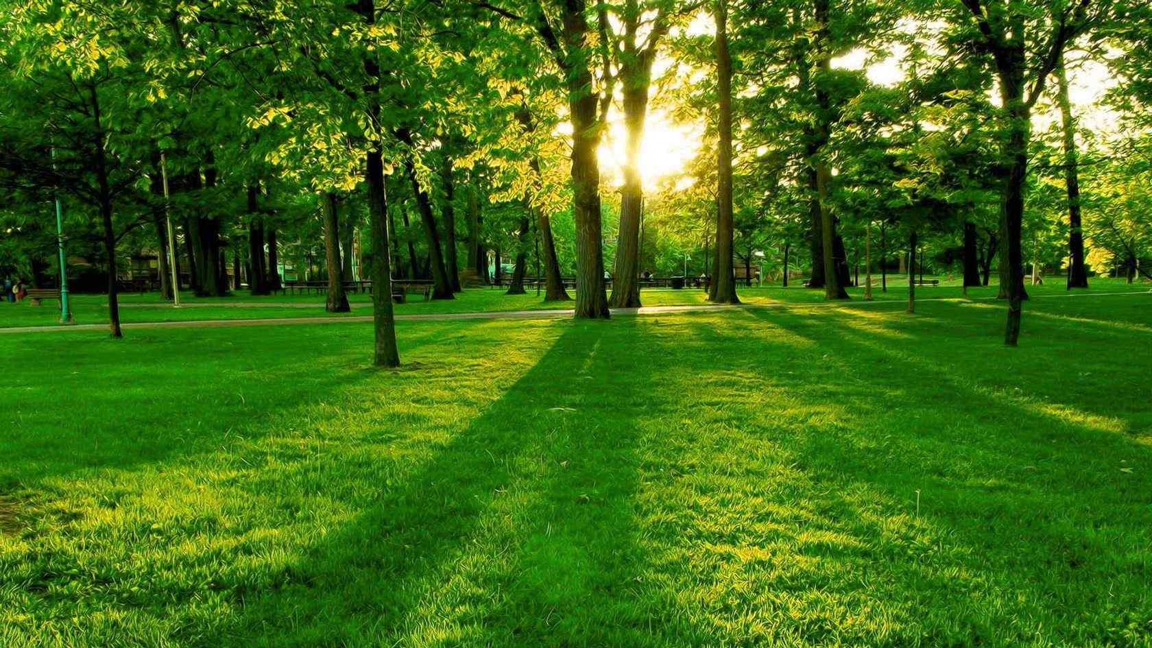 春天绿色的森林图片桌面壁纸