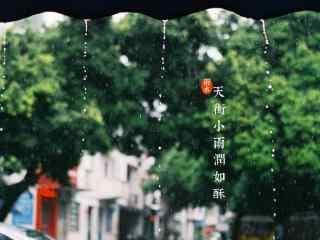 雨水节气-唯美春雨图片桌面壁纸