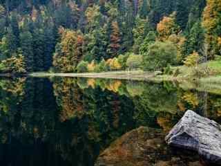 唯美森林里的山水