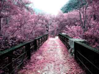 花海中的林间小道