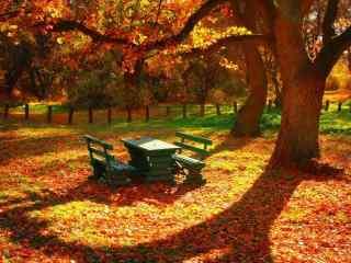 唯美落叶图片桌面