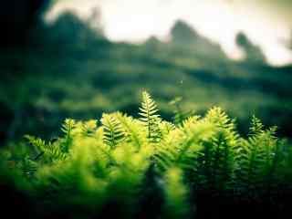 绿色小清新风景图