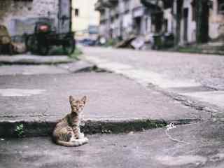 在街道旁休息的猫咪桌面壁纸