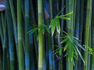 好看的竹林风景桌面壁纸