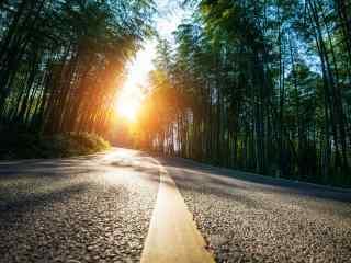 唯美竹林风景图片壁纸