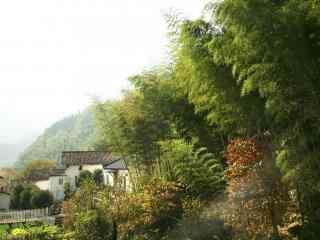 竹林风景桌面壁纸图片