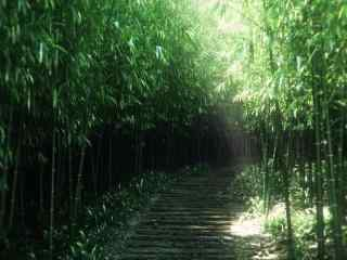 青翠竹林风景桌面壁纸