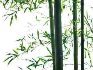 青青竹林风景图片壁纸