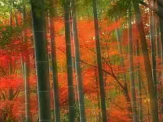 唯美的竹林风景桌面壁纸