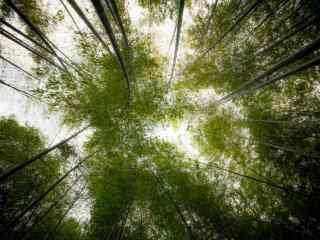 竹林天空风景桌面壁纸
