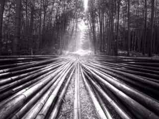 创意黑白竹林风景图片壁纸