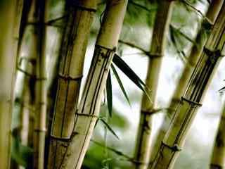 小清新竹林风景桌面壁纸