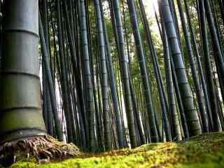 美丽的竹林风景桌面壁纸
