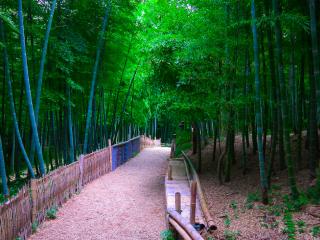 深幽的竹林风景图片壁纸