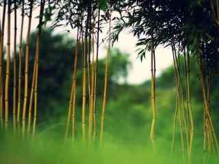 唯美竹林风景桌面壁纸