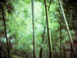 唯美幽静的竹林风景壁纸