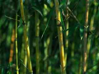 好看清新竹林风景壁纸