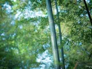 唯美竹林风景壁纸