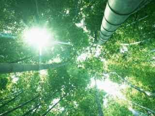 幽静的竹林风景图片