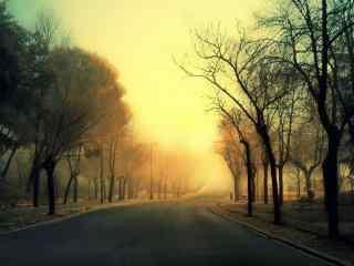 夕阳下的森林公路桌面壁纸