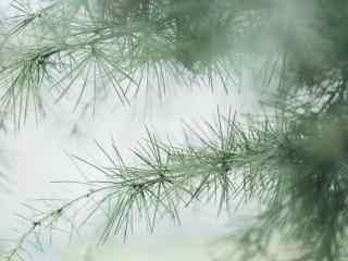 春日绿色植物桌面