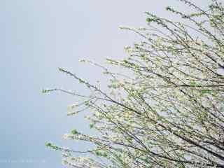春日文艺小清新植