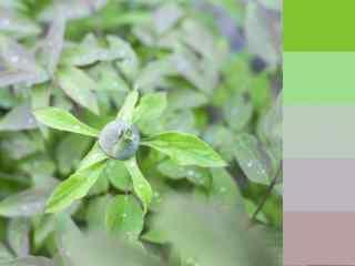 创意绿色植物小清