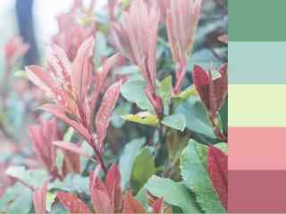 春天小清新植物图
