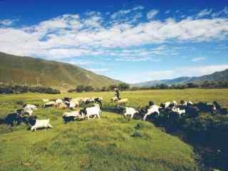 草原牧羊风景图片壁纸