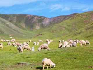 广阔的草原牧羊风景图片