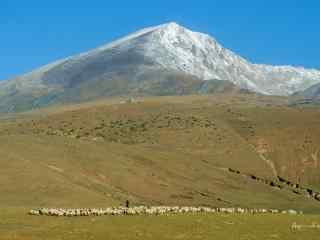 草原上牧羊风景图片