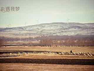 冬日草原牧羊摄影风景壁纸