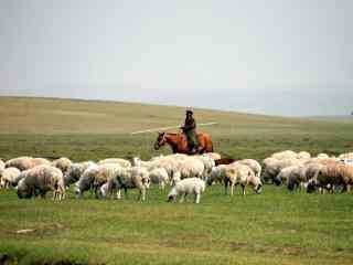 草原牧羊风景壁纸
